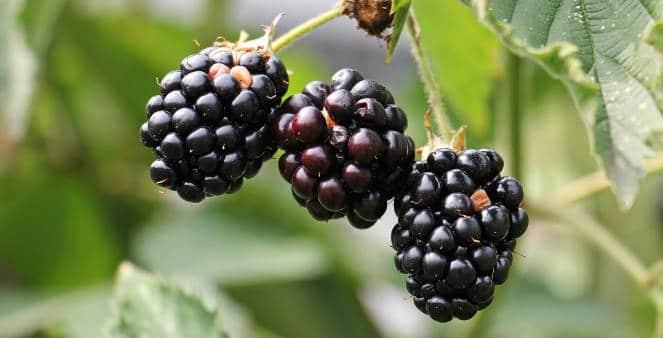 Leads reife Früchte - die wollen kaufen